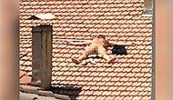Çatıda Çırılçıplak Güneşlenen Adama Gözaltı