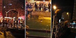 Süper Lig'e Yükselen Adana Demirspor'un Taraftarları Sokaklara Dökülüp, Kanala Atlayarak Kutlama Yaptılar