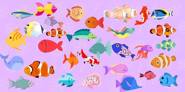 7. Hangi balığın çifti vardır?