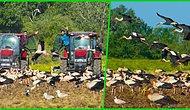Farklı Ülkelerden Gelip Türkiye'de Buluşan Leylekler ve Leylek Dostu Çiftçilerinin Hikayesi İçinizi Isıtacak!
