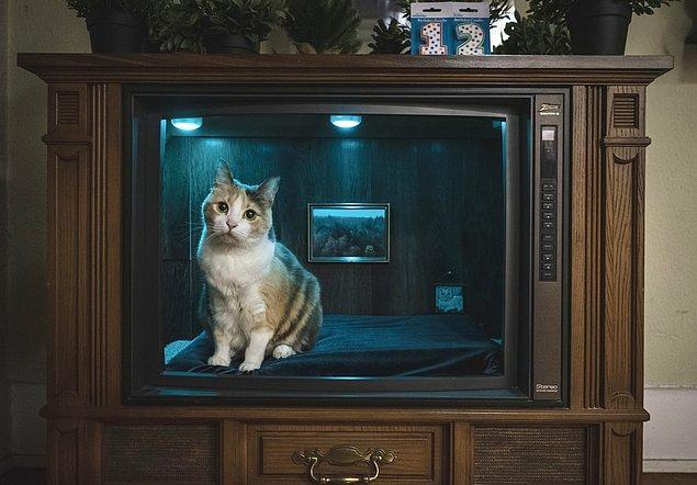 """11. """"Kedimin doğum günü için onun yatağı olarak kullanıma tekrar kazandırılan eski televizyon."""""""