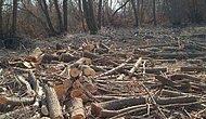 Tüketim Alışkanlıkların Yılda Kaç Ağacın Kesilmesine Sebep Oluyor?