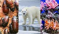 Olası Bir İklim Krizinden En Çok Etkilenecek Olan 10 Canlı Türü