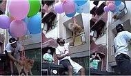 Bu Kadar da Olmaz! Köpeğini Helyum Balonlarıyla Uçurmaya Çalışan Hindistanlı YouTuber