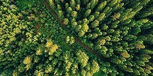 Bu Ağaçlardan Hangisi Ülkemizde Yetişmektedir?