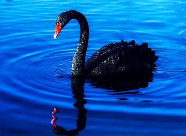 """9. """"Hayvanların rengi bile farklı. Bir keresinde bütün gün parkta oturup siyah bir kuğuyu izlemiştim."""""""