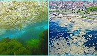 Ölüyor ve Kimse Duymuyor! İlk Defa 2007 Yılında Deniz Salyası Görülen Marmara Denizi'nin Son Hali Korkutuyor