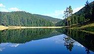Her Mevsim Farklı Güzellikte: 30 Farklı Ağaç Türüne Ev Sahipliği Yapan Yenice Ormanları
