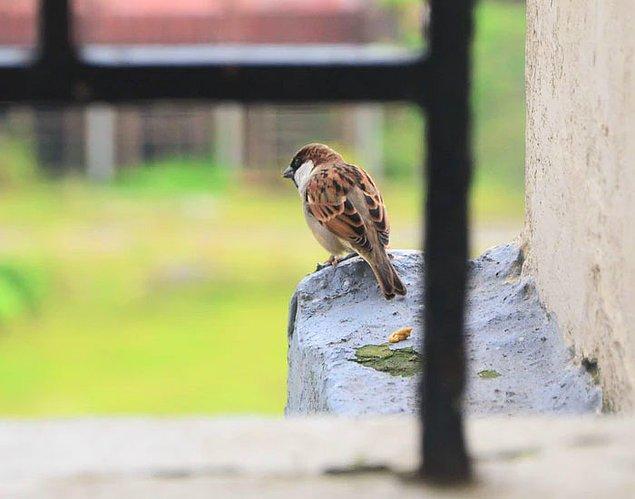 """3. """"Alt komşum, sokaktaki kuşlar sabahları çok gürültülü cıvıldıyor diye beni suçlayan mektuplar yazmıştı. Bu arada kuşlar evcil kuş falan değil, sokaktaki kuşlardan bahsediyorum."""""""