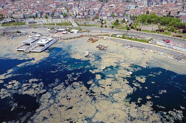 Ve son olarak ölüm döşeğindeki Marmara'yı kaplayan deniz salyası (müsilaj) felaketi...
