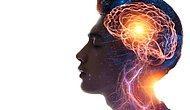 En Fazla Ortak Noktaya Sahip İki Organ Belirlendi: Beyin ve Testisler