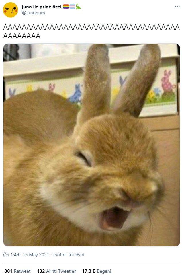 13. Şok bir dedikodu öğrenen tavşan.