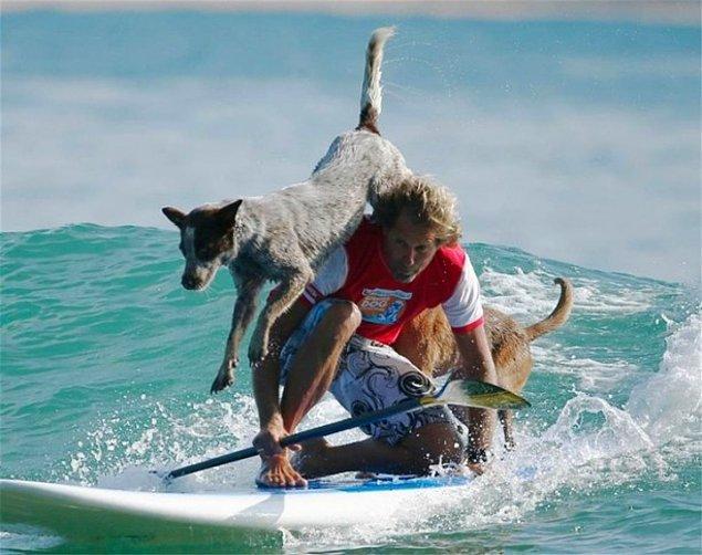 9. Köpek sörfü