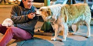 Mühendislik Kariyerini Bırakıp Hayatını Sokak Köpeklerine Adayan 'Koruyucu Melek' Hayatını Kaybetti