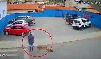 Yolun Karşısına Geçmek İsterken Yolda Koşan Köpeğin Çarpması ile Soluğu Yerde Alan Adamın İlginç Anları