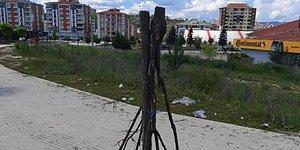 Kastamonu Belediyesi'nin Kesilen Ağaç İsyanı: 'Doğaya Düşmanlık Neden?'