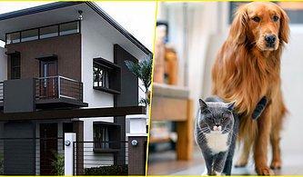 Dizayn Ettiğin Eve Göre Hangi Hayvanla Birlikte Yaşamalısın?