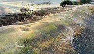 Avustralya'da Sel Felaketi ve Fare İstilasının Ardından Şimdi de Her Yeri Örümcek Ağı Kapladı