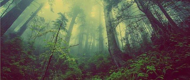 1. Dünya'nın her yerinde ormanlar yeniden oluşurdu.