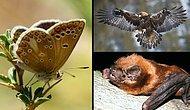 Uludağ'da Yaşadıklarını Bilmediğinize İddiaya Giriyoruz! İşte O 10 Hayvan