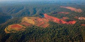 Amazon'da Yasa Dışı Ağaç Kesimine Karışmakla Suçlanan Brezilya Çevre Bakanı İstifa Etti