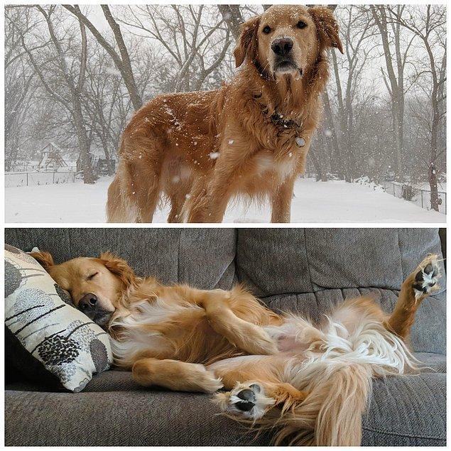 7. Bir köpek karda oynarken ve eve döndüğü zaman: