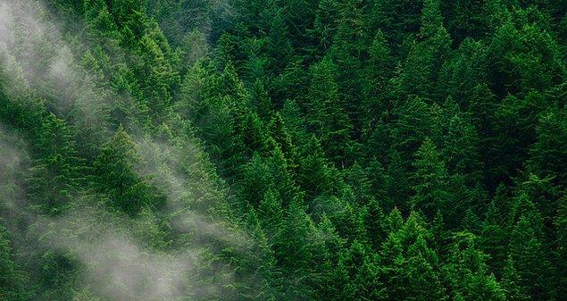 7. Eğer hedef bir orman oluşturmaksa kullandığımız fidanların orman ağacı olmasına dikkat etmeliyiz.