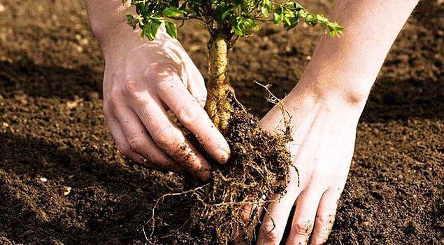 6. Ormanlaştırma yapmak için iyi bir planlama yapmak gerekir ki ormanın yapısını tehlikeye sokabilecek herhangi bir hata olmasın.
