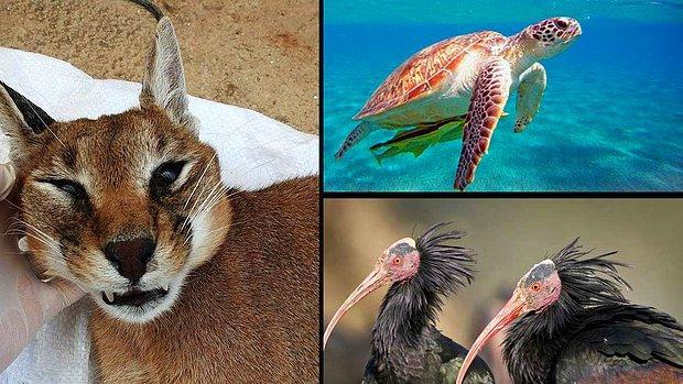 Ülkemizde Yaşanabilecek Olası Bir İklim Krizinde Nesli Tükenme Tehlikesi Altına Girecek 10 Hayvan