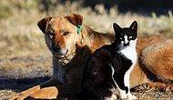 Hayvanları Koruma Kanunu Meclis'e Getirildi: Kedi ve Köpeklere Dijital Takip