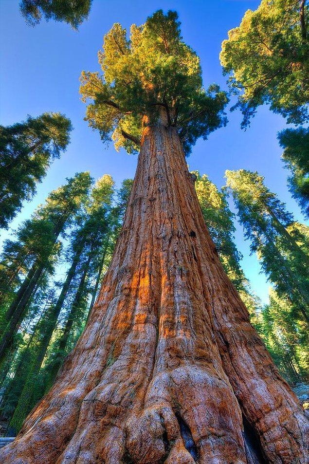 26. Ağaçlar yaşlandıkları için ölmezler. Bir hasar veya dışarıdan darbe almazlarsa sonsuza kadar yaşayabilirler.
