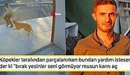 Köpekten Kaçarken Kamyon Çarpıp Hayatını Kaybeden Vatandaşın Ardından Yapılan Tepki Çeken İnanılmaz Paylaşım