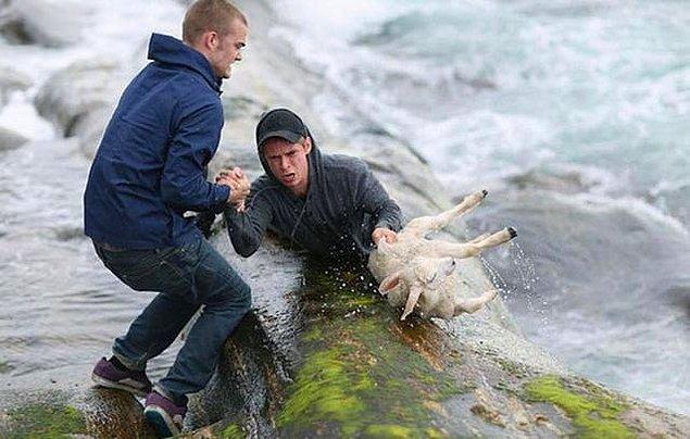 18. Kış ayında Norveç kıyılarında bir kuzunun denize düştüğünü gören iki genç, kendi hayatlarını düşünmeden suya atlamışlar.