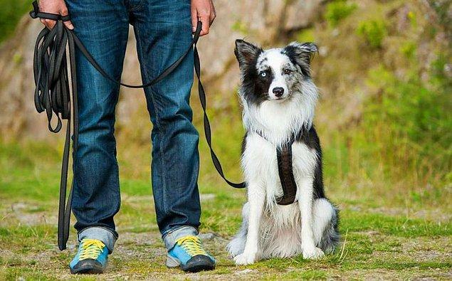 5. Peki, sen nasıl bir köpek sahibi olursun?