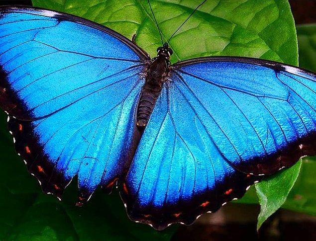 Bilimsel açıklamayı kelebekler üzerinden yapalım.