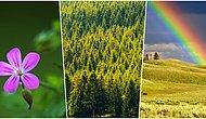 Bazen Baktığımız Güzellikleri Göremiyoruz: Doğanın Bize Armağanı 8 Şey