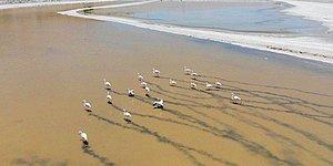 Yalıntaş Göleti Kurudu: Flamingolar Yaşam Mücadelesi Veriyor