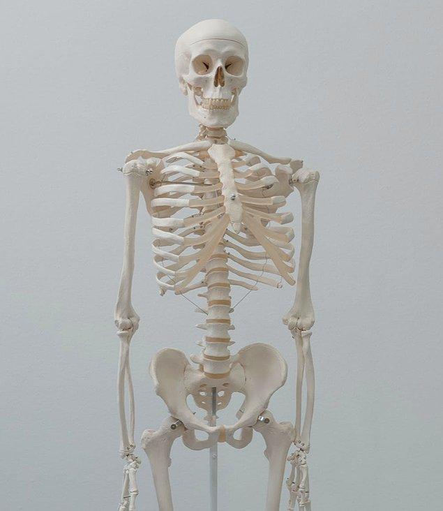 15. Son olarak sadece kemikler kalır ve zamanla kemikler toza dönüşür.
