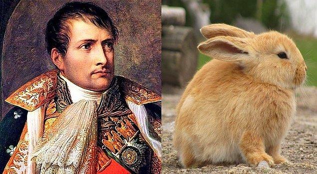 17. Napolyon Bonapart, tavşanlar tarafından saldırıya uğramıştır.