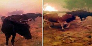 Manavgat'taki Yangında Hayvanlarını Kurtarmaya Çalışan Çiftçinin Çaresizliği: 'Ne Olursunuz Gitmeyin'