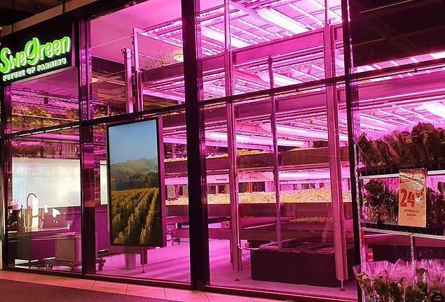 9. İsveç'teki süpermarketler, kendi yetiştirdikleri sebze ve meyveleri satabiliyor.