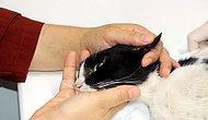 Bir Tarafta Yangında Can Veren Hayvanlar İçin Gözyaşı Dökenler, Diğer Tarafta Kediye Tecavüz Edenler