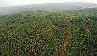 10'dan Fazla İlde Ormanlara Girişler Yasaklandı