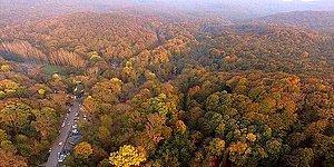 Ormana Girişler Hangi İllerde Yasaklandı? İstanbul'da Ormanlık Alan Yasağı Var Mı?