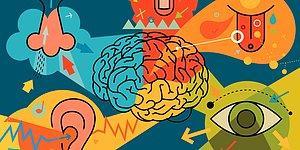 Bilimsel Olarak Olağanüstü Derecede Güçlü Olan Duyun Hangisi?