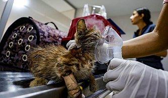 Manavgat'taki Yangından Etkilenen Hayvanlar İçin Seferberlik: Canbulan Yardıma Koşuyor
