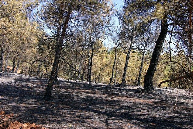 17:55 Uşak'ın Sivaslı ilçesinde ormanlık alanda çıkan yangın kontrol altına alındı.