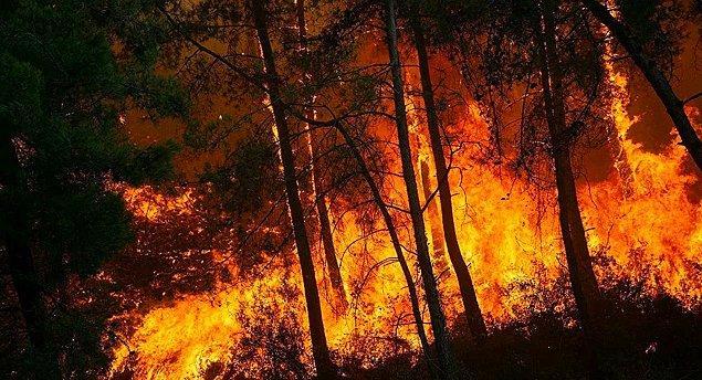 06:25 Orman Genel Müdürü: 144 orman yangınının 134'ü kontrol altına alındı