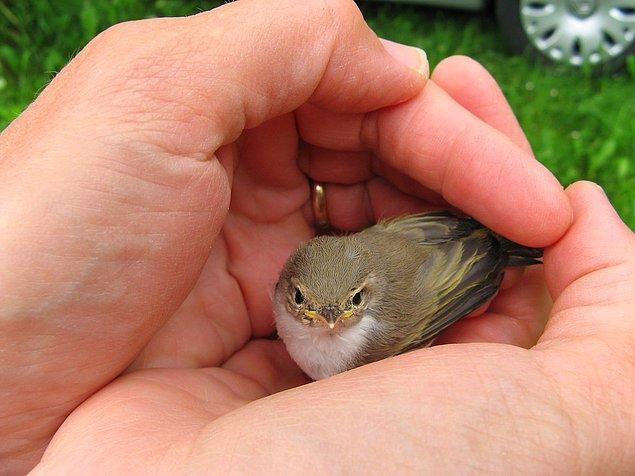 7. Avucunuzdaki bir kuş etrafınızda uçan yüzlerce kuştan daha değerlidir.