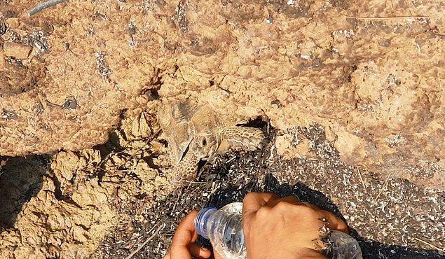 Manavgat'ta alevler arasında kalan kaplumbağa, ağaç kovuğuna girerek, yara almadan kurtuldu.